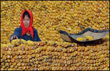 импорт кукурузы в китай