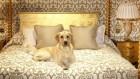 Отель, гостиница для животных, передержка собак.