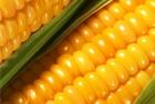 Закупаем кукурузу по всей Украине оптом Дорого!