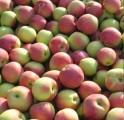 яблоки —лава ѕобедител¤м
