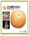 Сорт картофеля: Карлена - Абсолютно универсальный! Семенной картофель