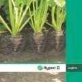 Инсектицид Нурел Д, 55% к.е., Цена 15 $ л. Оригинал