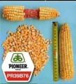 Семена кукурузы Пионер ПР39Б76