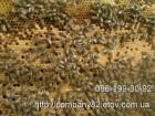 Пчелопакеты карпатской пчелы. Есть в наличии. Доставка по Укр.