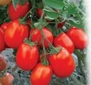 Семена помидор весовые и пакетированные от производителя
