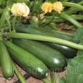 Семена кабачков весовые и пакетированные от производителя