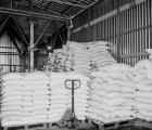 Очистка зерновых культур