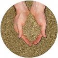 Семена Люцерны Банат ВС, Надежда