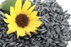 ѕредлагаю купить семена подсолнечника, сорта и гибриды подсолнечника.