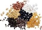 ООО «Мироновские Семена» предлагает сою Максимус (под гербицид)
