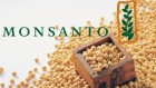 Соя, семена сои, сорт Гримо (Monsanto) устойчивая к раундапу