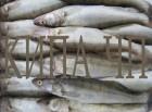 рыба речная свежемороженная