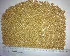 Реалізуємо насіння ранньої ярої пшениці