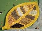 Продаємо насіння гірчиці - Изображение 1