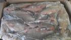 Продаётся речная свежемороженая рыба оптом.