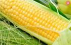 Покупаем  кукурузу  по выгодным ценам!!!