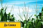 Кукуруза Dow Seeds/ Дау Сидс Да Сонка импорт