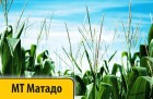 Кукуруза  Dow Seeds/Дау Сидс МТ Матадо Импорт от Оф. Дистрибьютора