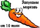 Куплю морковь, от 10тонн