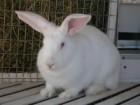 Комбикорм для кроликов на откорме РОСТ К92-2 от 35 дней и до забоя.