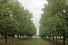 Куплю ореховый сад в Днепропетровской области