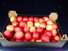 яблоки польские, пр¤ма¤ продажа от производител¤, без посредников!