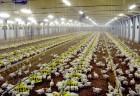 """Продам комбикорм для птицы на основе Венгерского примекса """"AGROFEED&quo..."""