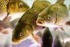 омбикорм дл¤ рыб тм ћультигейн