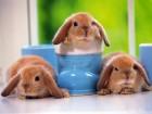 Полнорационный корм для кролей.