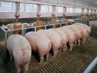 Продам комбикорм старт для свиньи