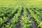 Средства защиты растений. Фунгициды, Syngenta, Инсектициды, Микроудоб