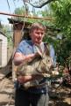 Продам кроликов супер породы Немецкий Ризен (Великан)Мясная порода.
