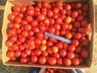 Продам томат