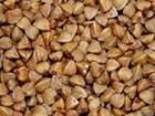 Семена гречихи Дикуль, Девятка, Украинка