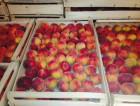 Продажа персиков