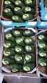 ѕродаем авокадо