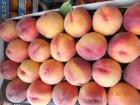 Купим персики оптом