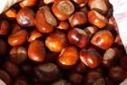 Продам каштан конский сушеный (плоды)