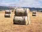 покупаем дорого зерновые и масличные