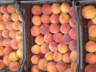 Продам срочно персик с сада сорт фаворит