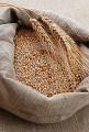 Семена озимой пшеницы украинской селекции разных сортов элита.