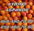 Куплю абрикос оптом, (не порченную) на заморозку и сушку. Харьков