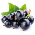 Продам чорнa смородинa, 20 t / ягоды черной смородины /EXTRA