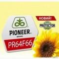 """Гибрид подсолнечника PR64F66/ПР64Ф66 от компании """"Pioneer"""""""