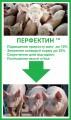 Перфектин - откорм свиней и реальная экономия корма до 25%