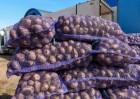 Картопля Опт Бела-Росса, Мелоди, Скарлет, Санте . От производителя