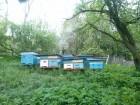Бджоло Сімї