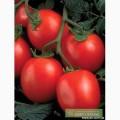 Продам помидор сорта солерос, перфектпил, освон, чумак
