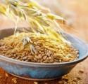 *Реализуем элиты засухоустойчивых ячменей,пшеницы,рапса*