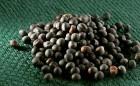 Семена рапса от производителей Syngenta, Euralis, Lembke